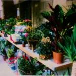Mercado de las Flores y Plantas en Viana