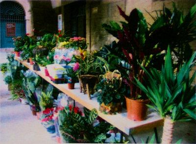 080426_mercado_flores_viana