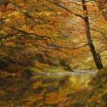 De paseo por la Selva de Irati