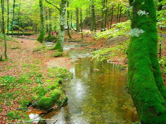 El encantador bosque de Quinto Real