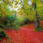 Pirineo Navarro: senderismo por la Selva de Irati