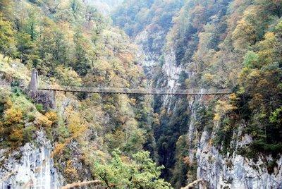 El Pirineo de Navarra:La Selva de Irati